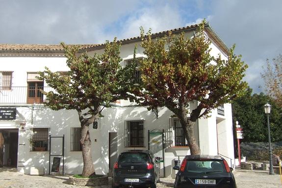 Cercis siliquastrum - arbre de Judée  - Page 4 Dscf7863