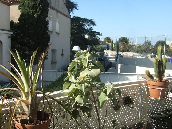 Re-confinement végétal Dscf8182