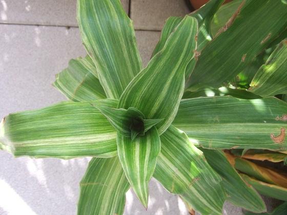 Re-confinement végétal Dscf8185