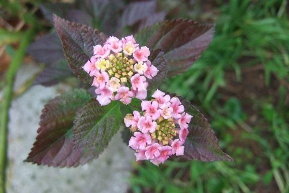 Jardins d'hiver Dscf8468