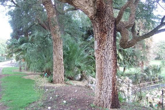 (44) Jardin des plantes - Nantes - Page 5 Dscf8660