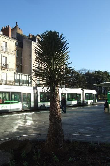 (44) Jardin des plantes - Nantes - Page 5 Dscf8681