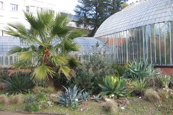 (44) Jardin des plantes - Nantes - Page 5 Dscf8740