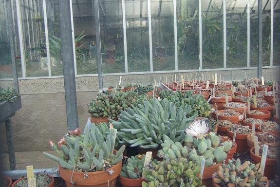 (44) Jardin des plantes - Nantes - Page 5 Dscf8741