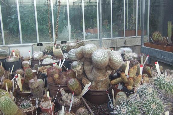 (44) Jardin des plantes - Nantes - Page 5 Dscf8743