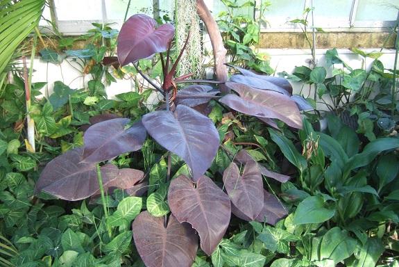 (44) Jardin des plantes - Nantes - Page 6 Dscf8745