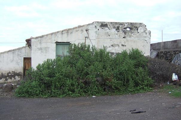 Portulacaria afra Dscf9620