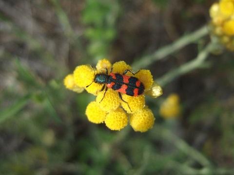 """Déficoncours """"Les insectes sur les plantes"""" - les votes Dscf9728"""
