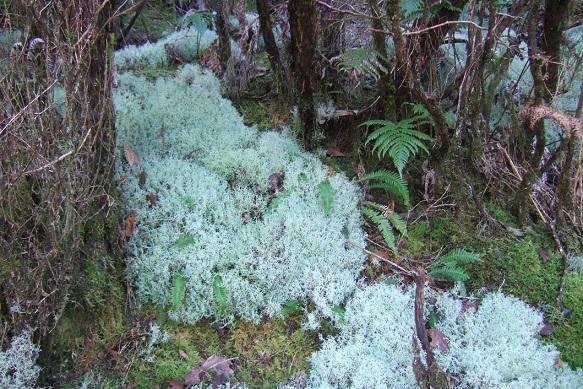 """Déficoncours """"Fantastiques lichens"""" - les votes Dscf9740"""