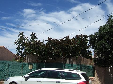 Ficus elastica - caoutchouc - Page 2 Dscf9835