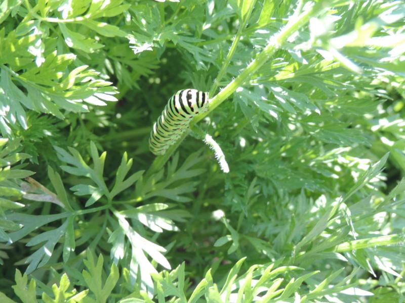 """Déficoncours """"Les insectes sur les plantes"""" - les votes Dscn9910"""