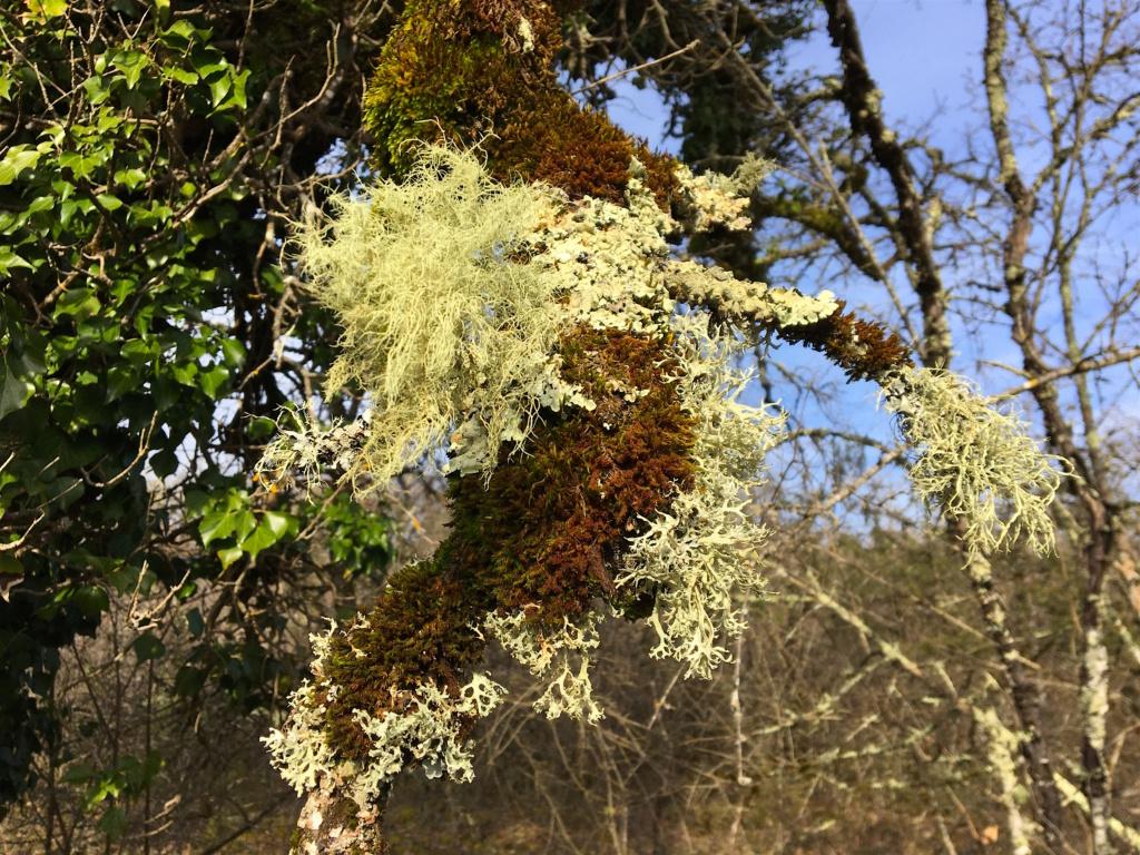 """Déficoncours """"Fantastiques lichens"""" - les votes Img_0210"""