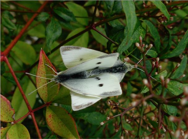 """Déficoncours """"Les insectes sur les plantes"""" - les votes Ixbl6g10"""