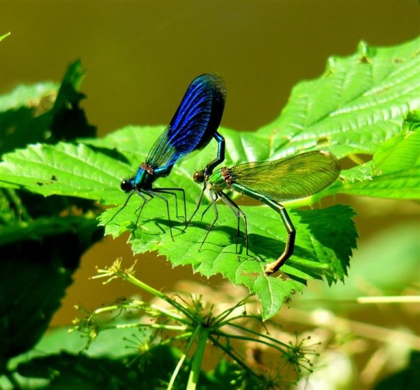 """Déficoncours """"Les insectes sur les plantes"""" - les votes Libbe110"""