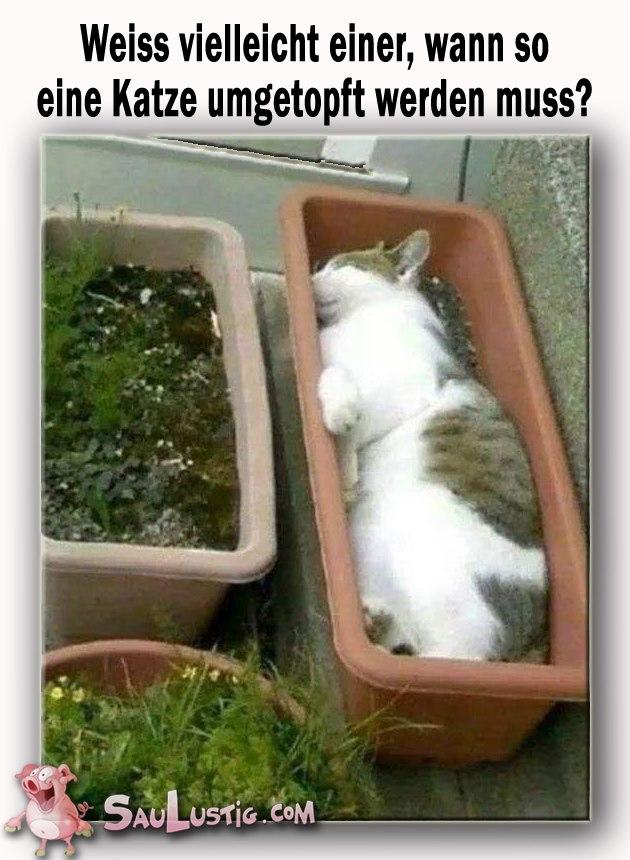 Witze - Seite 5 Katze_10