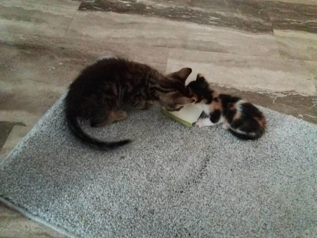 Βοήθεια! Νεογέννητο γατάκι έπεσε από τις σκάλες! Img-5811