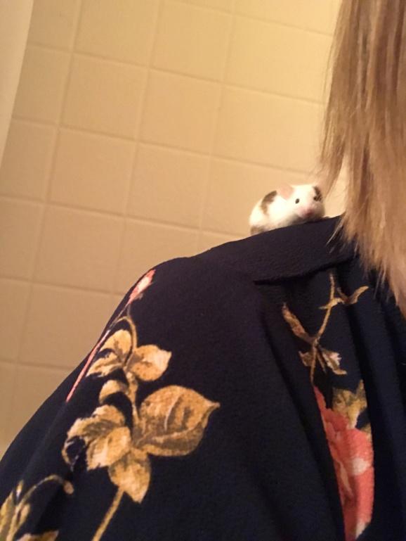 Meet my mice (and help me name one)!  6046da10