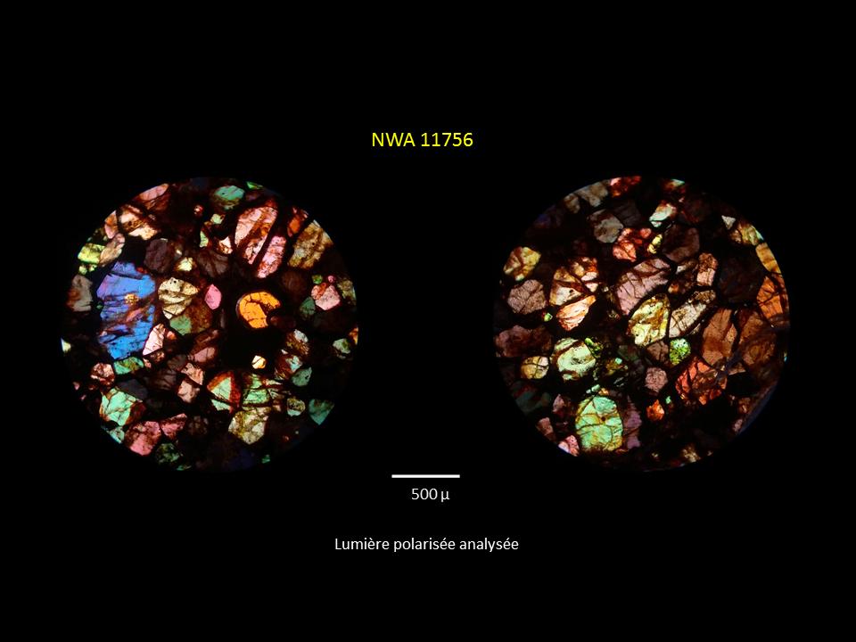 Brachinite NWA 11756 Mzotzo13