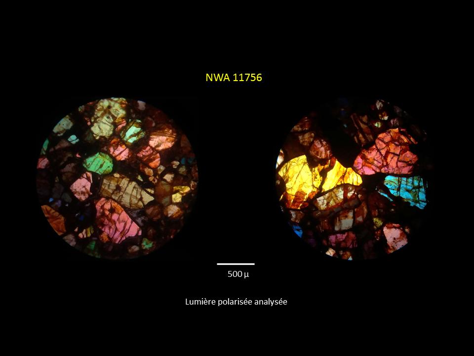 Brachinite NWA 11756 Mzotzo15