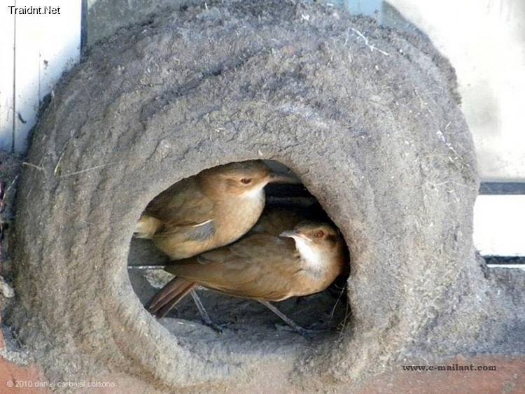 بالصور قام شاب في الارجواي بتصوير لحظات بناء بيت العمر لزوجين 2010