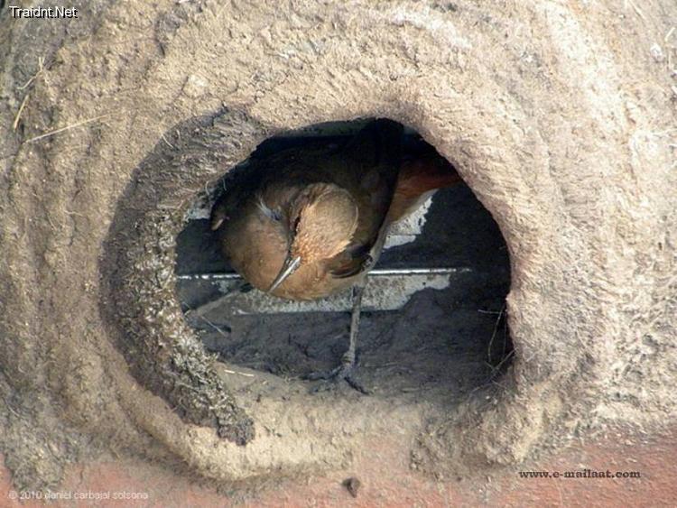 بالصور قام شاب في الارجواي بتصوير لحظات بناء بيت العمر لزوجين 2310