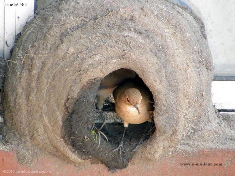 بالصور قام شاب في الارجواي بتصوير لحظات بناء بيت العمر لزوجين 2410