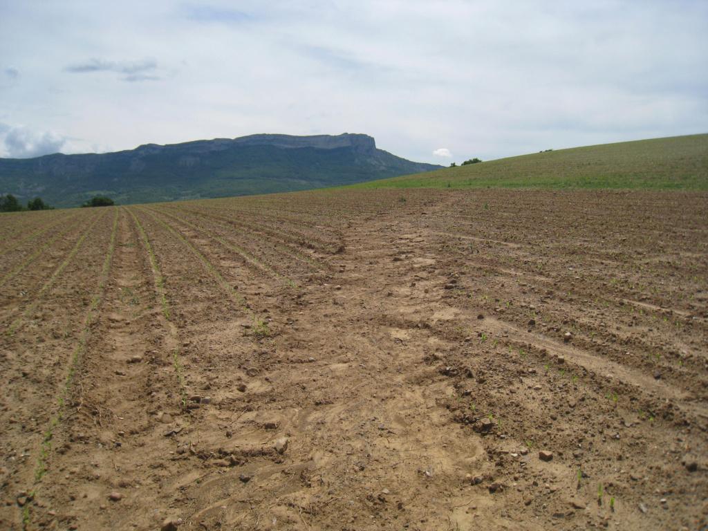 Agriculture qualitative ou quantitative Ruisel10