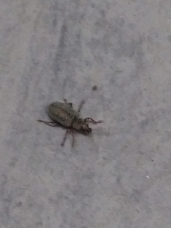 Insecte  a identifié  P_201910