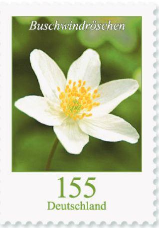 Blumengruß aus Deutschland - Seite 2 155_bu10