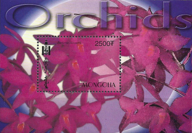 Orchideen Orchid10