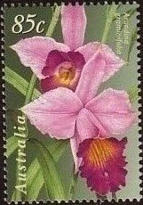 Orchideen Orchid11
