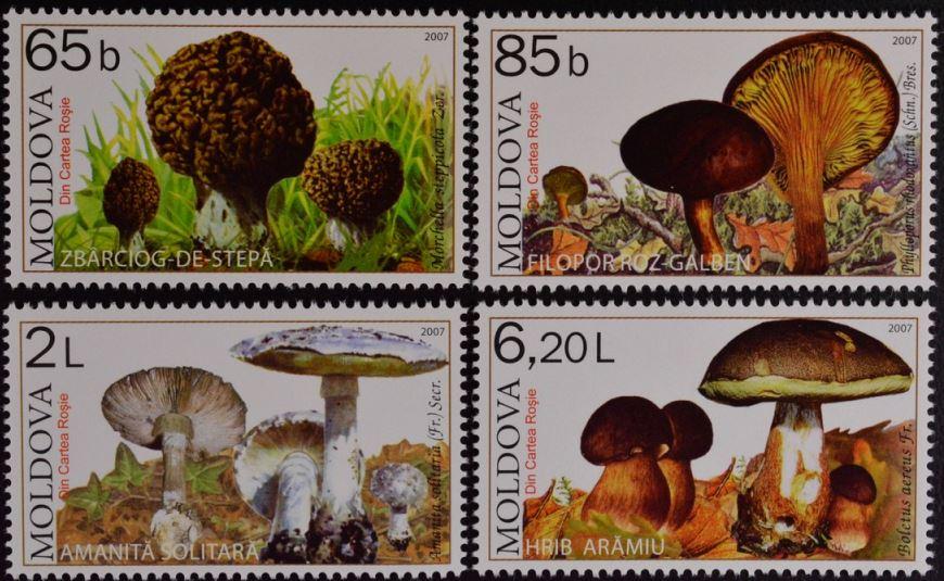 Pilze Pilze_21