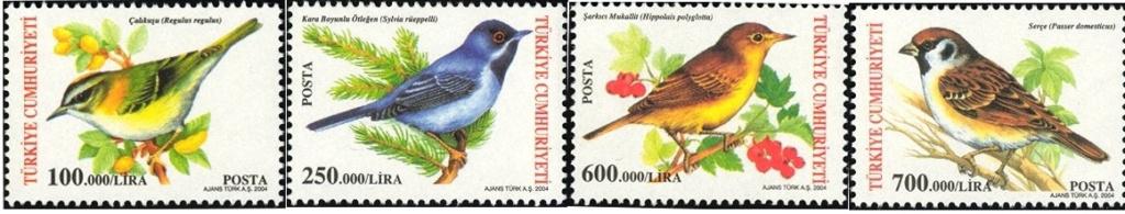 Vögel Tzrke_10