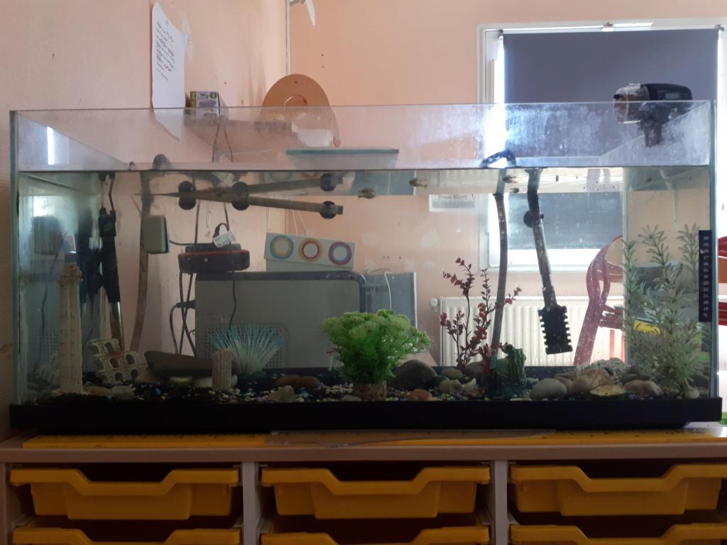 présentation de mon aquarium 20190711