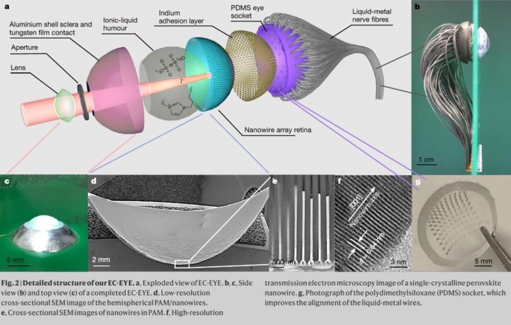 Создан первый бионический глаз Aa33