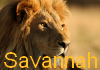 African Savannah [Afiliación] 100x7010
