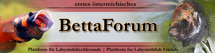 Betta Forum