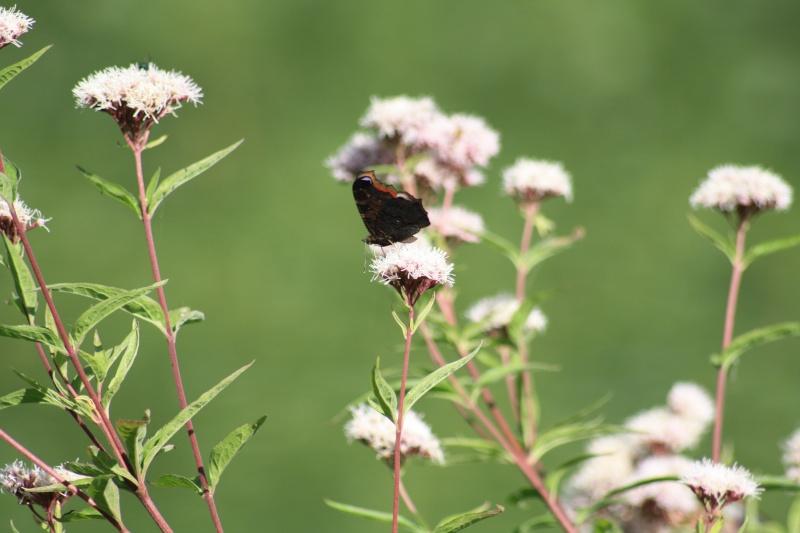 Les papillons. - Page 2 02092049