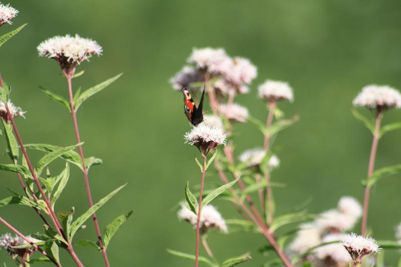 Les papillons. - Page 2 02092051