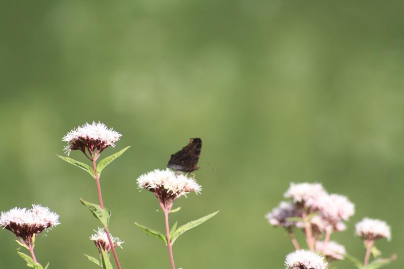 Les papillons. - Page 2 02092060