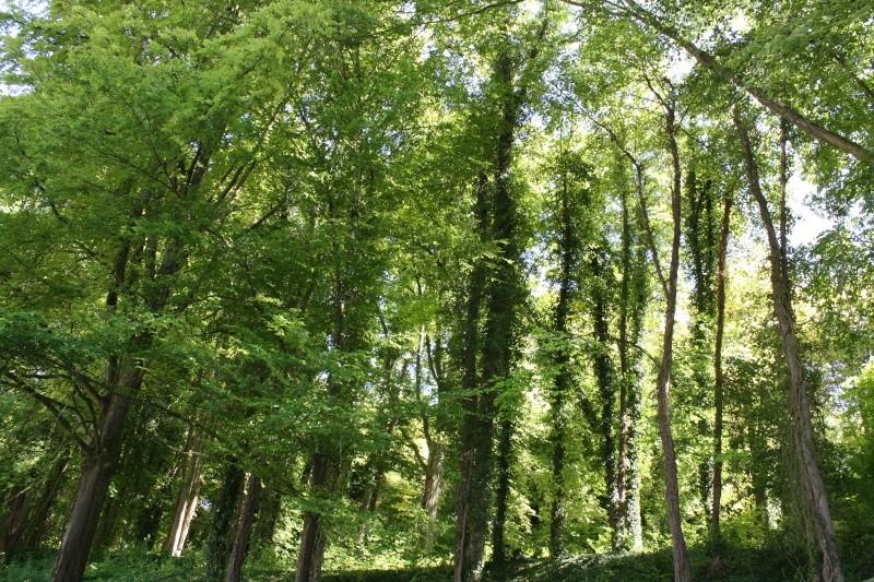 Les arbres en général - Page 2 03072033