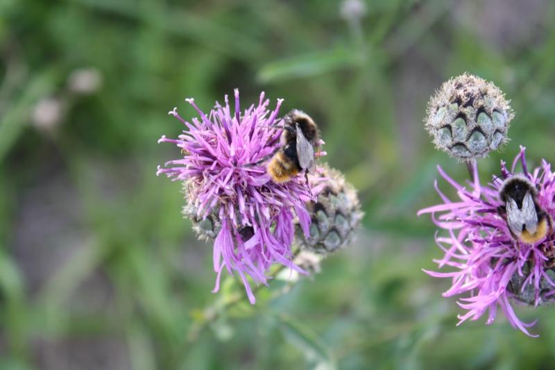 Les abeilles. 05072014