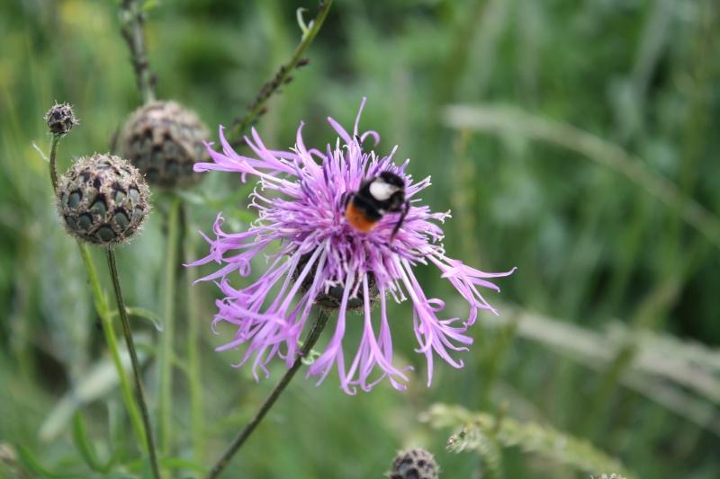 Les abeilles. 15062011