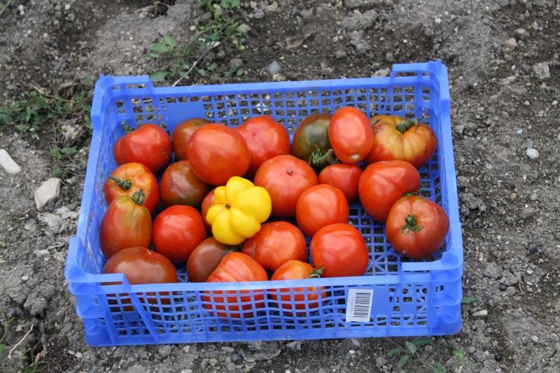 La tomate Img_4632