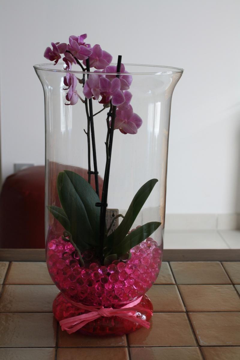 Les Orchidées - Page 6 Img_9110