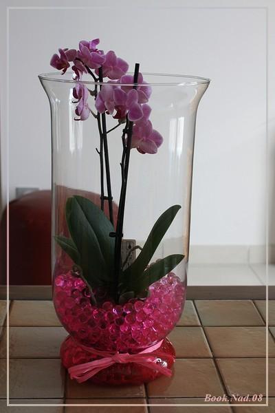 Les Orchidées - Page 6 Img_9111