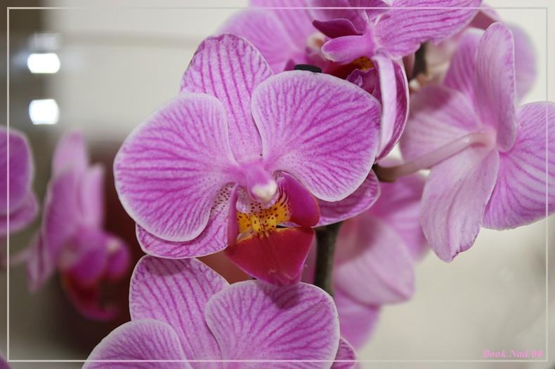 Les Orchidées - Page 6 Img_9113