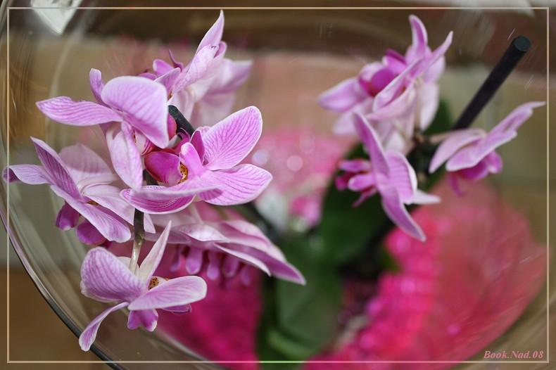 Les Orchidées - Page 6 Img_9114