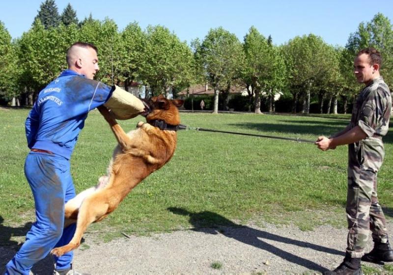 Les chiens parachutistes du 1er RHP au camp de GER 2012_126