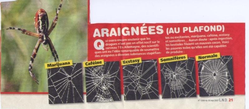 humour Araign10